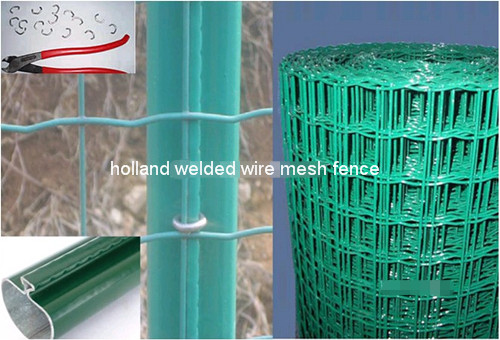 Holland Welded Wire Mesh Fence BD-03