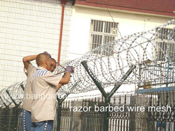 Razor Barbed Wire Mesh BD-01